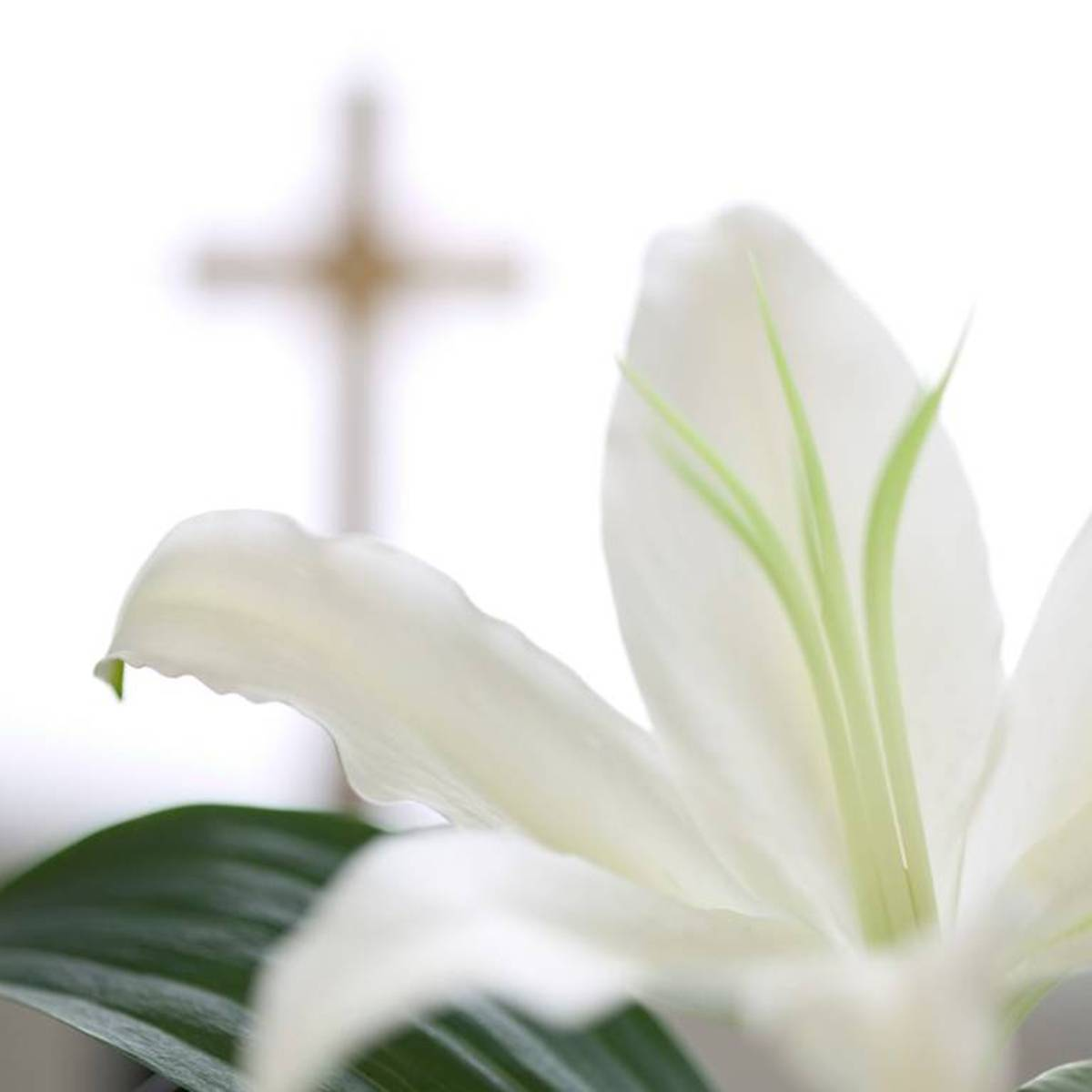 Easter Lily Donations